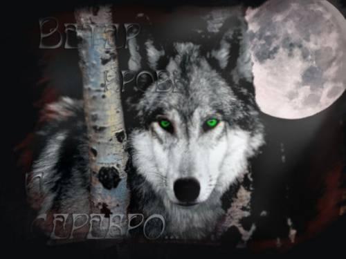 Волки картинки волки оборотень